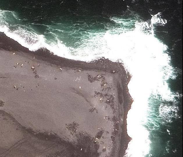 vulcao rebanho lobos marinhos Imagens impressionantes da Terra (e vem muito mais por aí)