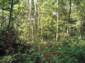IBGE lança manual técnico da vegetação brasileira