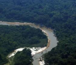 SBFl abre consulta pública do Plano de Outorga Florestal Brasil irá monitorar a Amazônia em países vizinhos