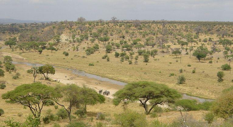 africa1 Brasil va a monitorear florestas en África Central