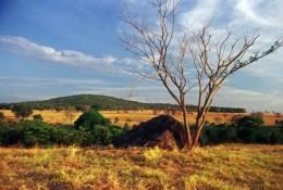 Cerrado Será mapeado el uso y la cobertura de la tierra del Bioma Cerrado