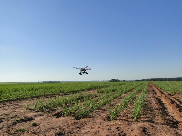 Drone coleta imagens de experimento de cana de acucar Drones para agricultura serão debatidos no 5º GeoPantanal