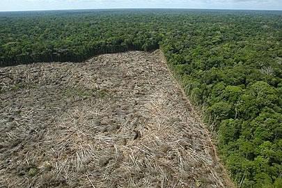 Regeneracao-Amazonia