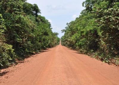Regeneração da Amazônia é maior que o desflorestamento