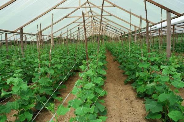article 1 600x399 Cartilha apresenta dados sistematizados sobre agropecuária no Amazonas