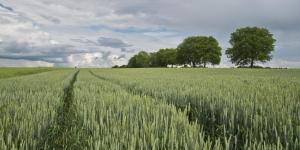 pablo 300x150 Associação Brasileira de Bancos adota sensoriamento remoto de áreas agrícolas