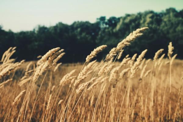 nature field summer agriculture 600x400 Incubadora Tecnológica da ESALQ realiza segunda edição do AgTech Day