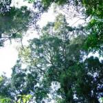 article1 150x150 Sistema de dados espaciais é ampliado para todos os estados amazônicos