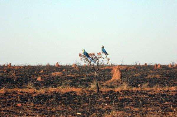 11.04 Projeto do MCTIC vai monitorar desmatamento incêndios florestais e emissões de gases no Cerrado 600x399 Ministério da Ciência vai monitorar desmatamento e queimadas no Cerrado