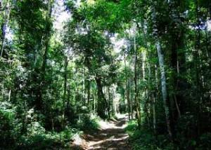 article 300x214 Estudo produz o maior acervo já reunido de informações geoespaciais da Amazônia