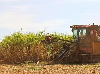 Crises hídricas e aumento da disputa pela água podem dificultar a irrigação em períodos de estiagem, aponta estudo feito por pesquisadores da Unicamp (foto: CTBE / CNPEM)