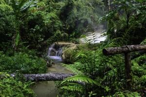 floresta 300x199 Artigo: importância do CAR e PRA para a transparência do Código Florestal