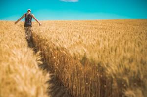 propriedade rural inteligente 300x199 Inpe desenvolve aplicativo com previsão de chuvas para agricultores