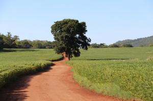 agronegocios 300x199 AgroTools é reconhecida em relatório da WWF em parceria com FGV