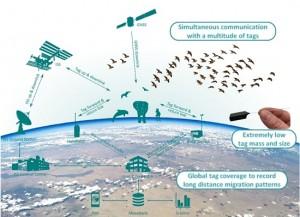 antena rastrear animais iss 300x217 Estação em órbita vai monitorar animais a partir do espaço