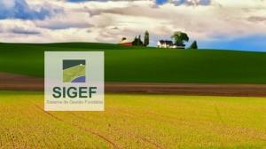 SIGEF 730x410 300x168 Curso online aborda principais dificuldades no uso do SIGEF