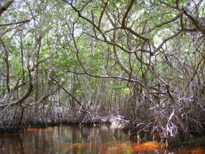 atlas dos manguezais 300x225 ICMBio anuncia lançamento do Atlas dos Manguezais do Brasil