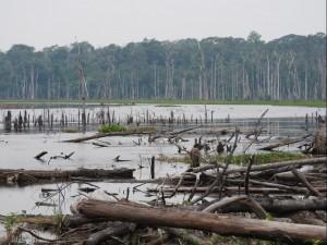 INPE investiga processos que caracterizam o desmatamento na Amazônia 300x225 Inpe investiga processos que caracterizam o desmatamento na Amazônia