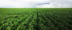 agricultura de precisao com drones 300x127 Empresa brasileira adota software da SimActive para agricultura com Drones