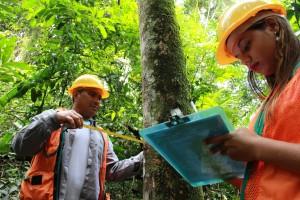 manejo florestal 300x200 Novo software da Embrapa auxilia no manejo florestal sustentável