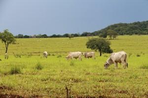 agronegocio brasileiro 300x199 Embrapa elabora documento para subsidiar candidatos sobre desafios da agricultura