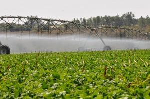 pivo central agricultura de precisao 300x199 Pesquisadores debatem projeto piloto para irrigação de precisão
