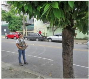 contagem de arvores em bh 300x266 Belo Horizonte implanta Cadastro e Gestão do Inventário das Árvores