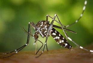 mosquito tigre Mapas inteligentes: el arma de Madrid para combatir la amenaza del mosquito tigre