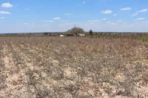 sistema de alerta de desertificacao 300x200 Instituto Nacional do Semiárido anuncia Sistema de Avaliação da Desertificação