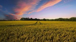 credito rural e geo 300x169 CNA e Incra discutem alteração de prazos para Georreferenciamento