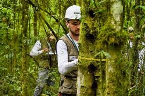 levantamento de biomassa 300x199 Levantamentos revelam diversidade florestal do Paraná