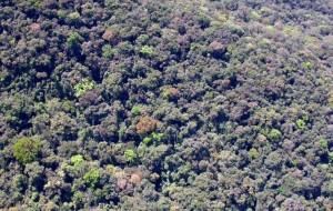 inventario florestal de sao paulo 300x190 Geoambiente inicia novo inventário florestal do Estado de São Paulo
